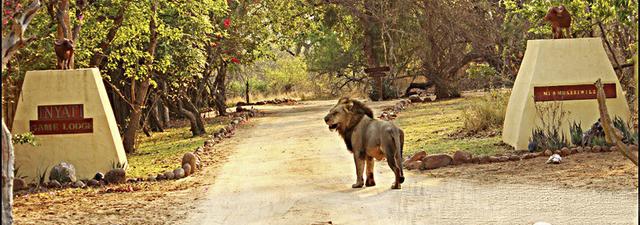 Wildlife Journal March 2011 by Khimbini Hlongwane