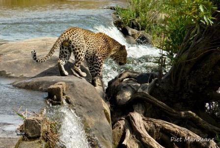 Leopard Causeway