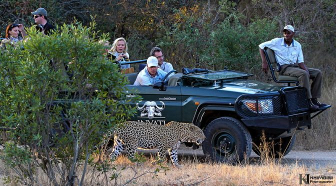 Mawuwani : July 2012 Wildlife Journal
