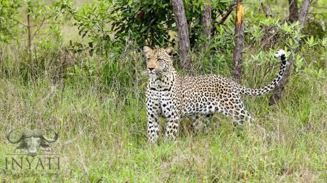 INY Tlangisa female