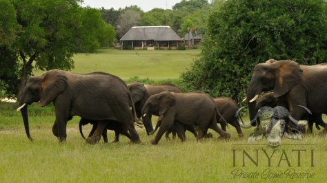 Elephant crossing in camp