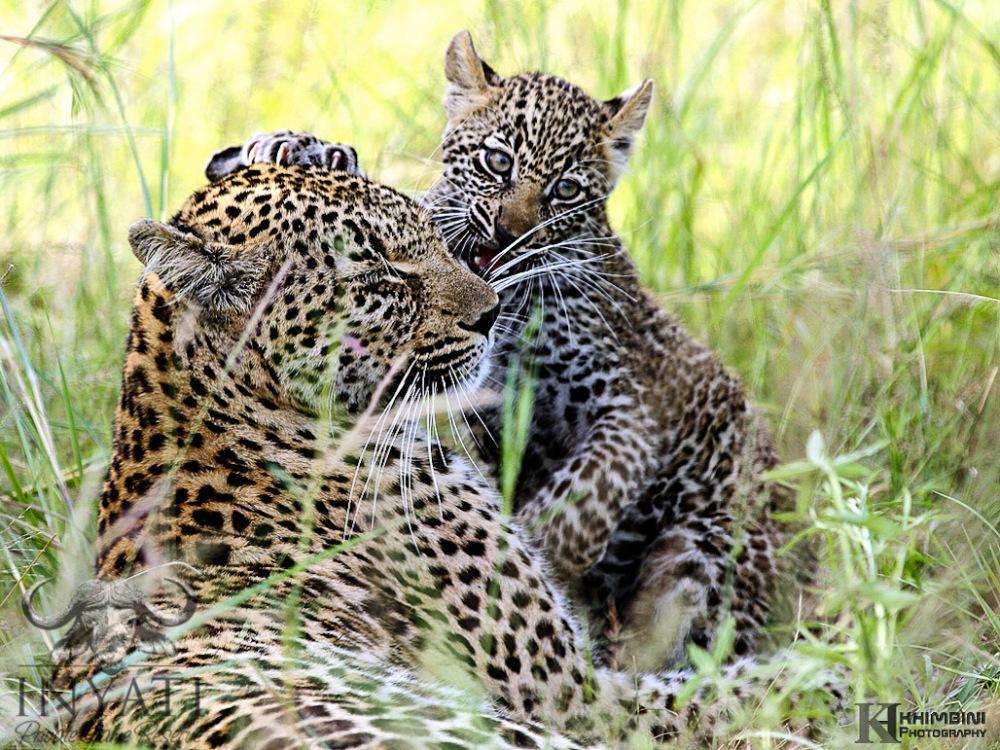 Nsunguti / January - 2013 Wildlife Journal (3/6)
