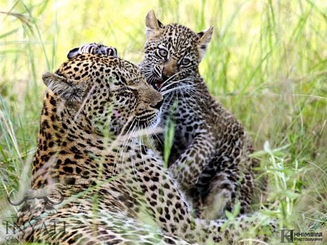 Hlabankunzi female and cub