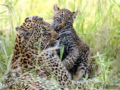 Hlabankunzi female and cub