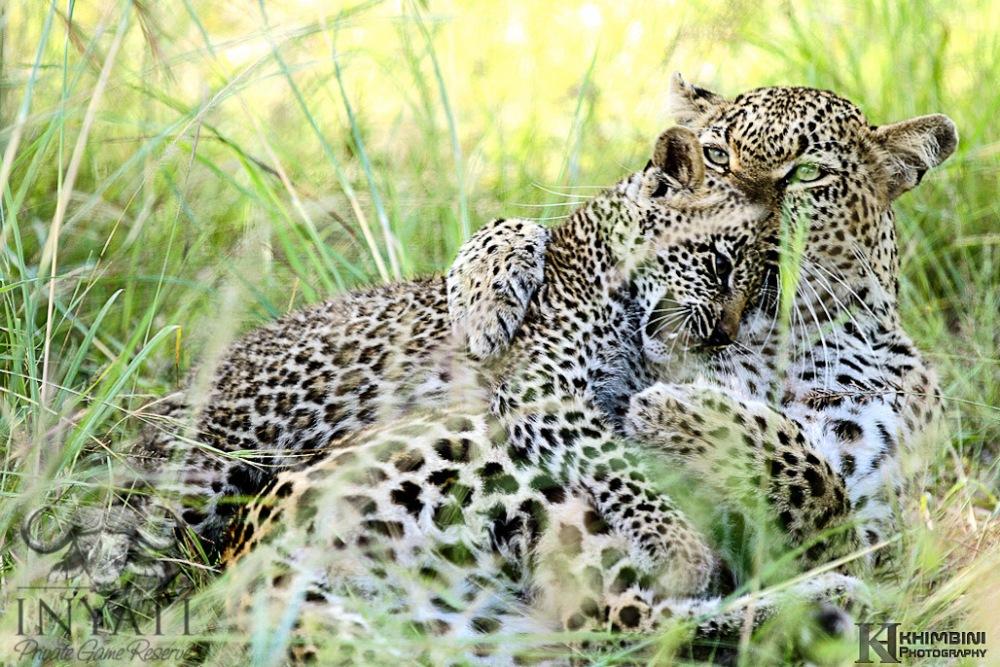 Nsunguti / January - 2013 Wildlife Journal (5/6)
