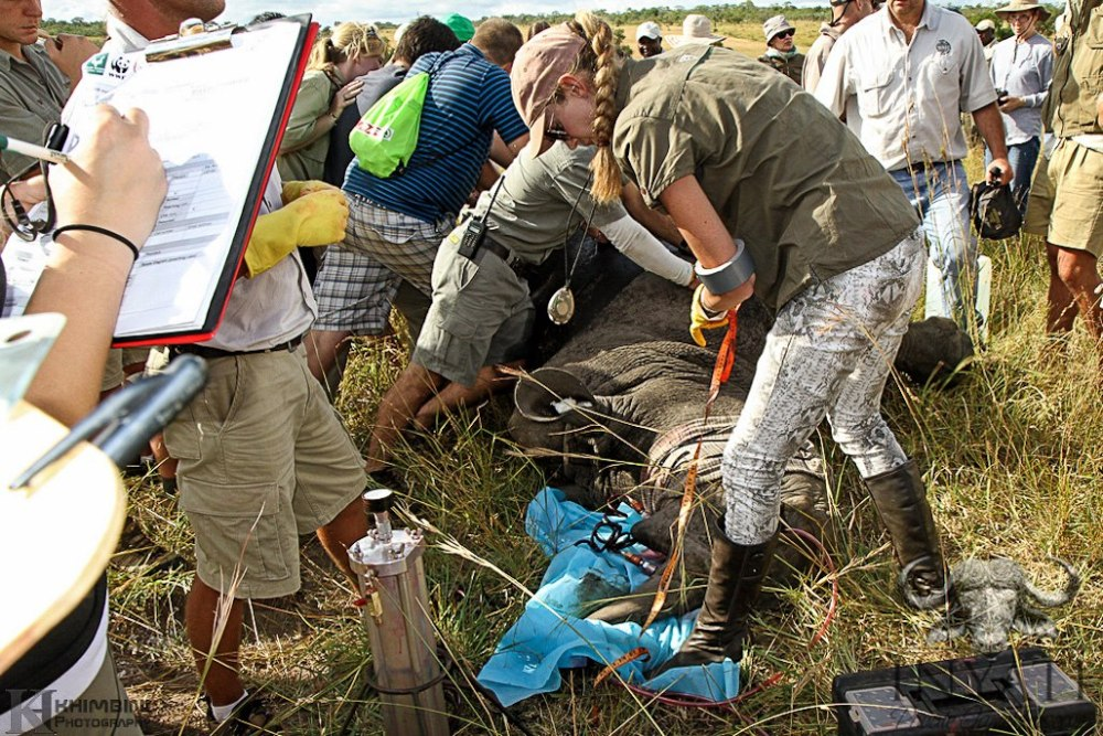 Rhino Rescue Project - Inyati and the Sabi Sand Reserve (4/4)
