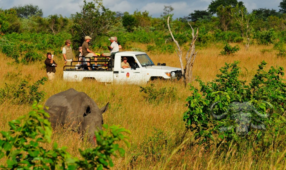 Rhino Rescue Project - Inyati and the Sabi Sand Reserve (1/4)