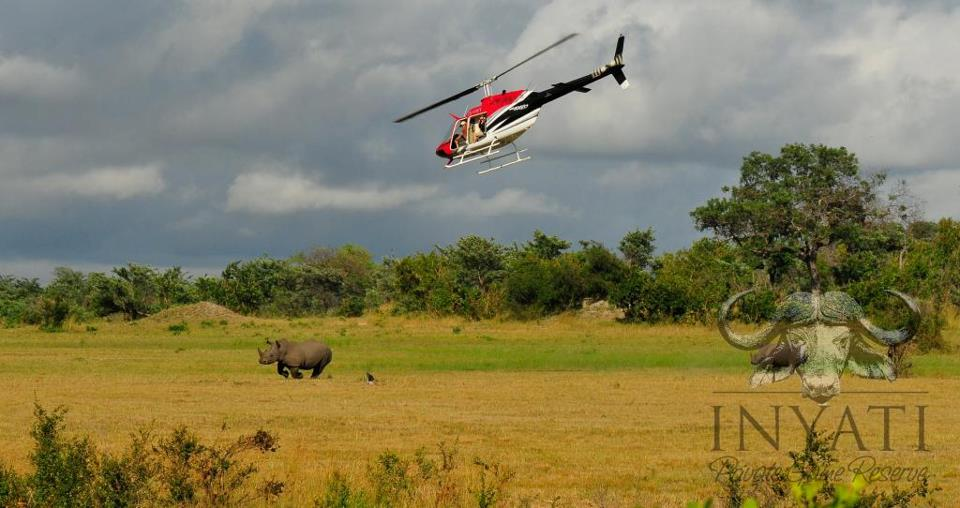 Rhino Rescue Project - Inyati and the Sabi Sand Reserve (2/4)