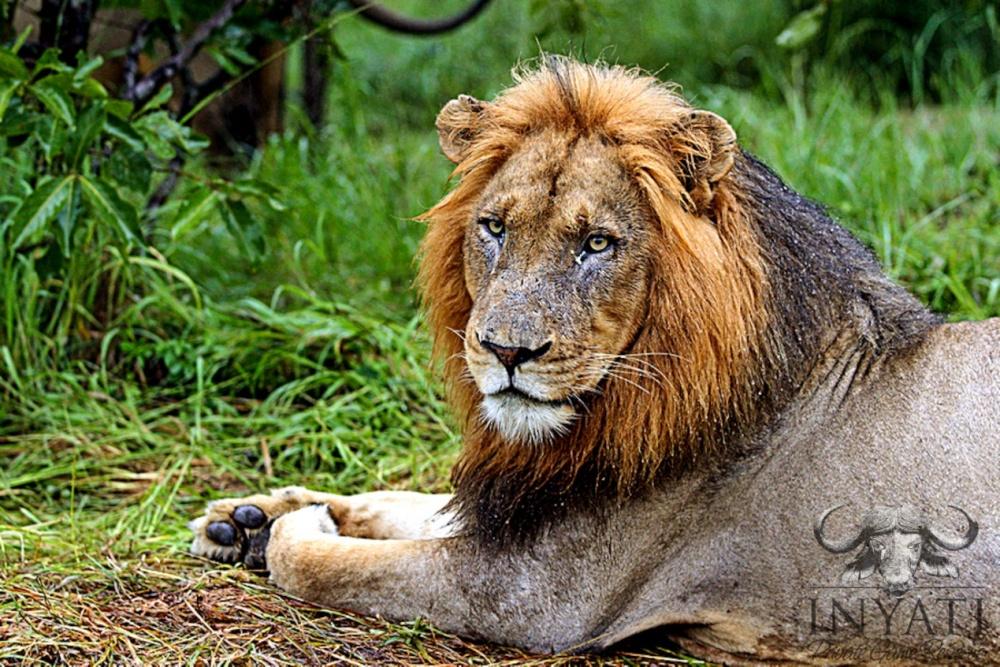Nsunguti / January - 2013 Wildlife Journal (6/6)