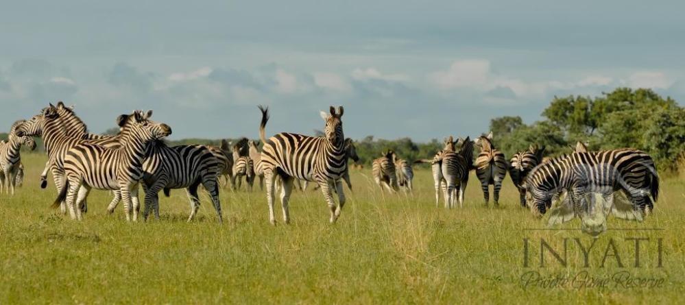 Nyenyenyani / February 2013 Safari Journal (2/6)