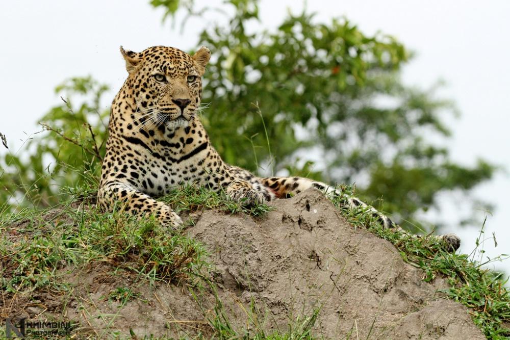 Nyenyenyani / February 2013 Safari Journal (3/6)