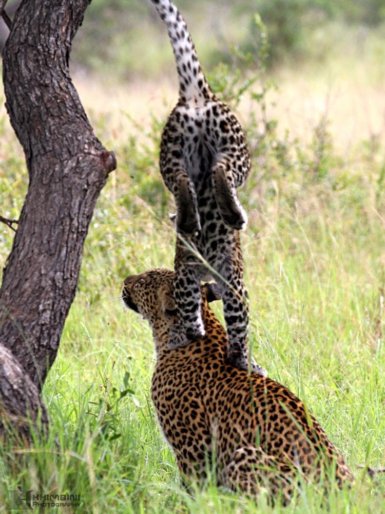 Nyenyankulu / March 2013 Safari Journal (5/6)