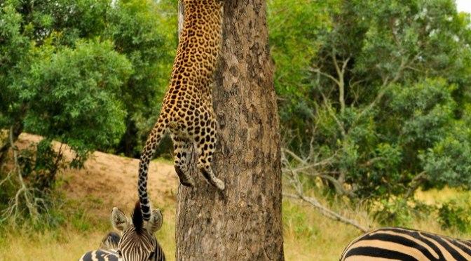 April 2013 Safari Journal