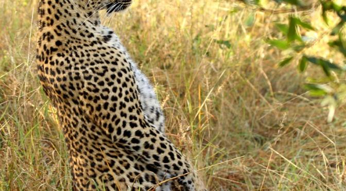 May 2013 Safari Journal
