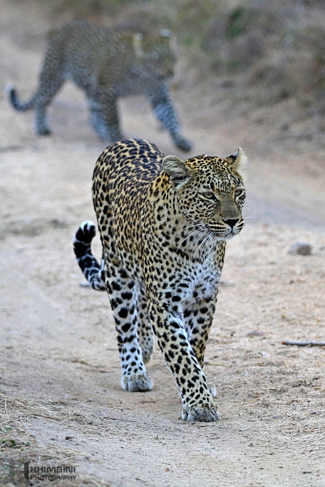 Khotavuxika / June  2013 Safari Journal  (6/6)