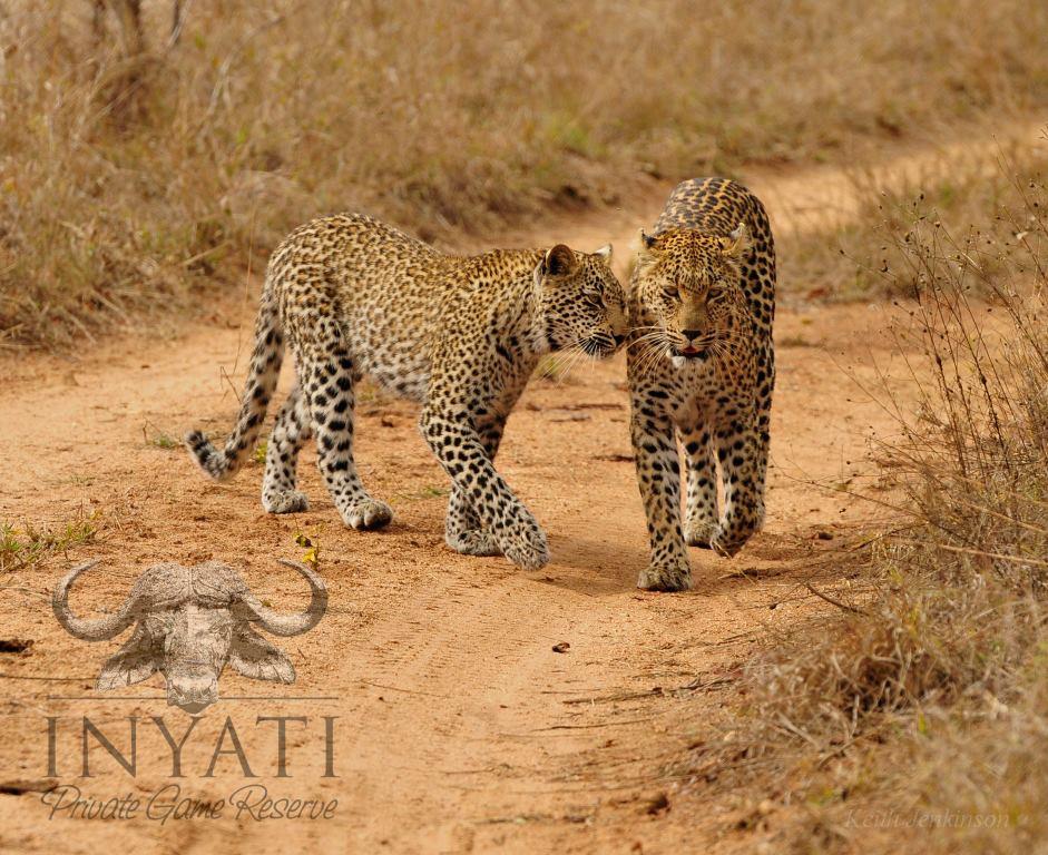 August / Mhawuri Safari Journal2013 (6/6)