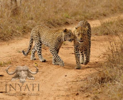 Hlabankunzi and cub