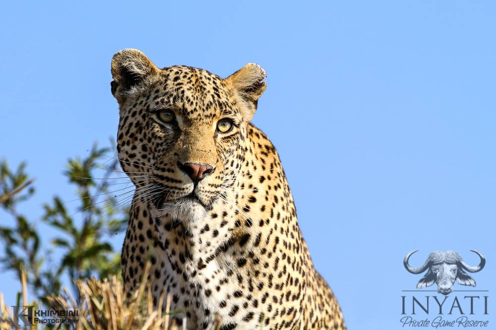 August / Mhawuri Safari Journal2013 (5/6)