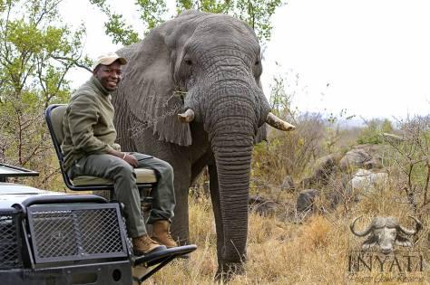 Elephant (Loxodonta africa