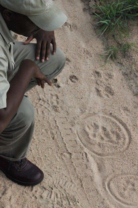 Khimbini tracking