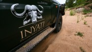 Sensational Safari