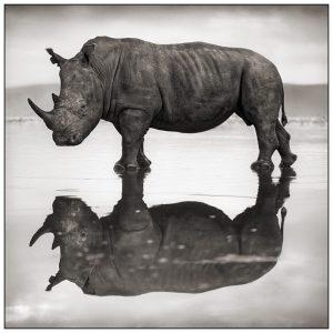 If Rhinos Go Extinct