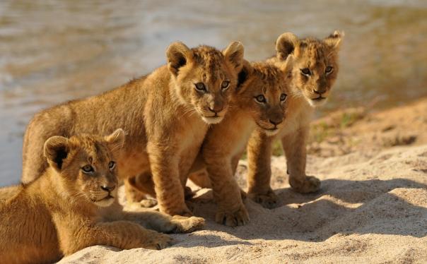 INY Othawa cubs