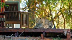Sabi Sand Affordable Lodging
