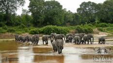 Most diverse wildlife in Africa