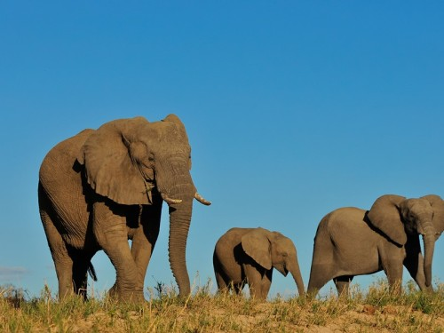 Interpretive game drives