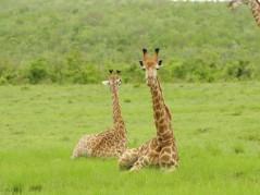 All inclusive Safari Experience