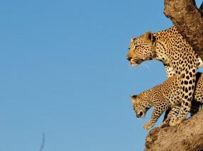 Idyllic Safari