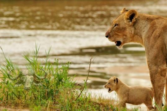 Adjacent to the world-renowned Kruger National Park