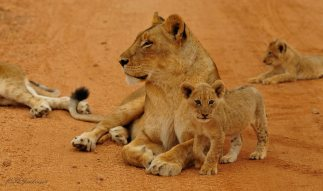 South African Lowveld