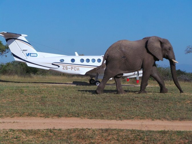 Inyati Game Lodge airstrip