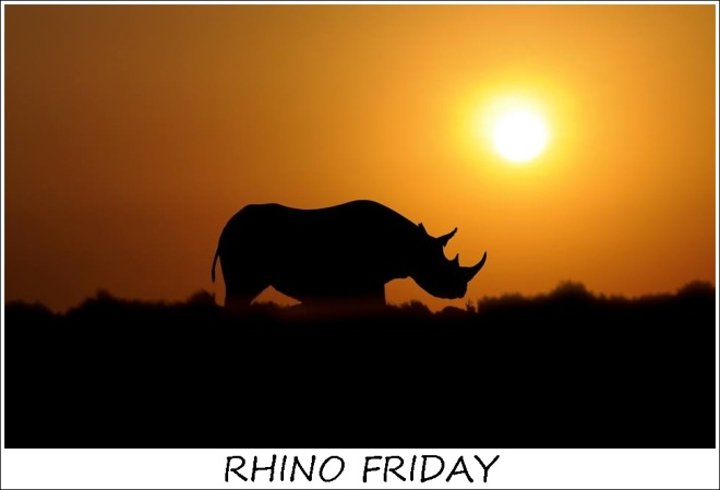 25 Things You Might Not Know About Rhinos