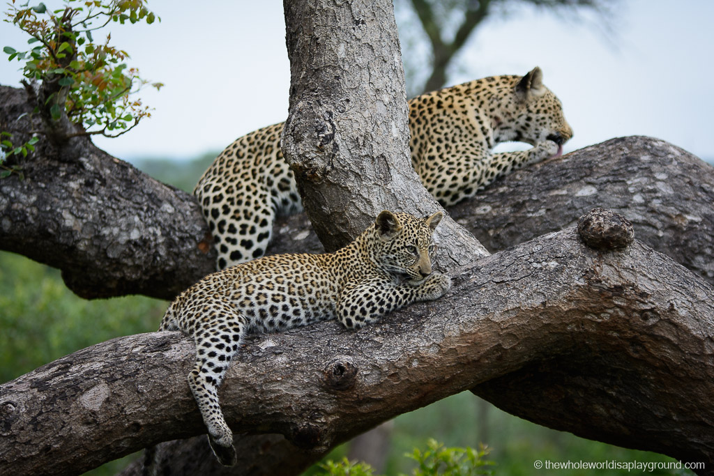 Inyati Game Lodge by Elaine McArdle