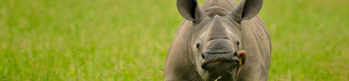 Inyati's Safari Blog