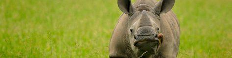 cropped-cropped-cropped-cropped-cropped-iny-save-the-rhino11.jpg