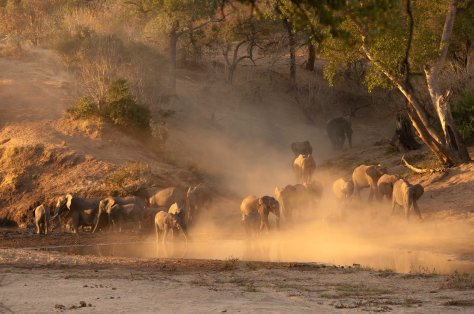 Elephant dust herd