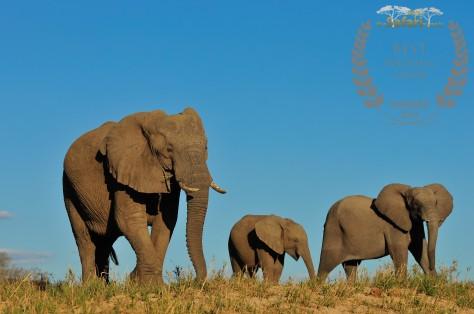 INY Elephant family